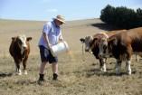 John with his bulls. 148850_01